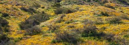 Helling Californië Poppy Super Bloom Panorama stock foto