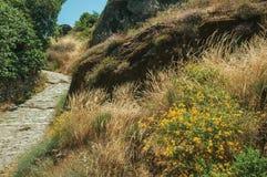 Helling die door droge struiken en rotsen dichtbij Monsanto wordt behandeld stock fotografie
