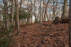 Helling en Bomen in de Winter stock fotografie