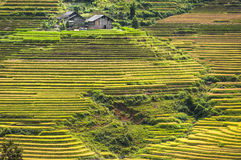 Helling met rijstterrassen dat wordt gevuld Royalty-vrije Stock Foto
