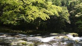 Helling van de rivier de stromende rots stock video