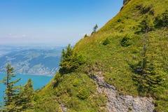 Helling van MT Rigi in Zwitserland in de zomer royalty-vrije stock foto