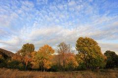 Hellingen van de Bieszczady-Bergen in de herfstseizoen in Zuidoostenpolen - het Nationale Park van Bieszczadzki Stock Afbeeldingen