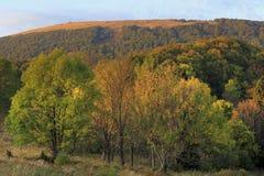 Hellingen van de Bieszczady-Bergen in de herfstseizoen in Zuidoostenpolen - het Nationale Park van Bieszczadzki Stock Foto