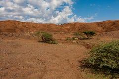 Hellingen van de vulkanische krater van Al Wahbah met vegetatie, Saudi-Arabië royalty-vrije stock fotografie