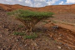 Hellingen van de vulkanische krater van Al Wahbah met vegetatie, Saudi-Arabië royalty-vrije stock foto