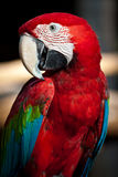 Hello. A macaw looks so happily and friendly Stock Images