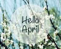 Hello April.Blurred branches of cherry blossoms on a blue sky background. Springtime concept.Selective focus stock photography