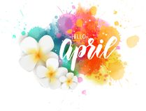 Hello April - floral spring concept background. Abstract background with watercolor colorful splashes and frangipani plumeria flowers. Hello April handwritten vector illustration