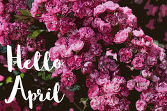 Hello April with flowers Royalty Free Stock Images