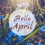Hello April greeting card with blue first flowers. In background Royalty Free Stock Images