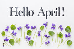 Hello April greetings with viola flowers Stock Images