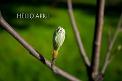 Hello April, message with Beautiful nature scene Stock Image