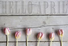 Hello April sneed in uitstekende houten achtergrond, met bloeiende roze de lentetulpen stock afbeeldingen