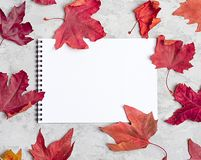Hello autumn background: Apples, pumpkins and fallen leaves on concrete background.Copy space for text. royalty free stock images