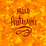 Hello autumn background. Autumn leaves card template for design banner,ticket, leaflet, card, poster and so on Stock Images