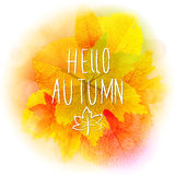 Hello autumn background. Hello autumn leaves and colors vector background Royalty Free Stock Photography