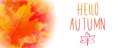 Hello autumn background. Hello autumn leaves and colors vector background Royalty Free Stock Photos