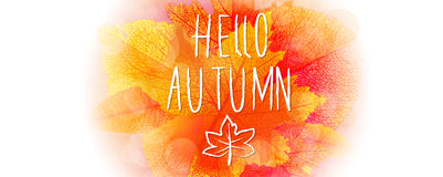 Hello autumn background. Hello autumn leaves and colors vector background stock illustration