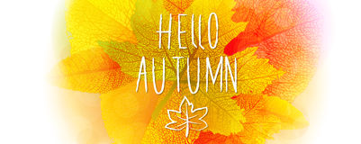 Hello autumn background. Hello autumn leaves and colors vector background royalty free illustration