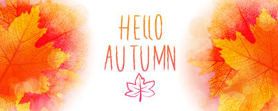 Hello autumn background. Hello autumn leaves and colors vector background Royalty Free Stock Images