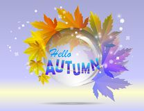Hello autumn calligraphy with illustration of bunch of maple and Stock Photography