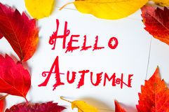 Hello Autumn calligraphy note with fallen leaves. On white paper royalty free stock photography