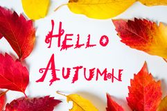 Hello Autumn calligraphy note with fallen leaves. On white paper stock photos