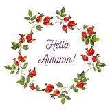 Hello autumn card with hips frame, sketchy design, vector illustration. Hello autumn card with hips frame, sketchy design, vector graphic illustration Royalty Free Illustration