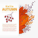 Hello autumn with colorful leaves and fruits background Royalty Free Stock Images