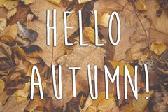 Hello autumn fall text sign on beautiful yellow and brown autumn. Leaves on the ground, autumn background wallpaper. seasonal greeting card concept. creative royalty free stock photos