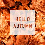 Hello autumn, greeting text on colorful vector illustration