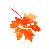 Hello Autumn label on watercolor maple leaf Royalty Free Stock Photography