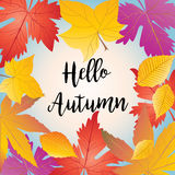 Hello Autumn. Calligraphy lettering. Autumn leaves background. Fall maple tree leafs border. Fall leafs pattern. Autumn leaves poster. Autumn maple leaf frame Stock Photography