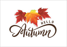 Hello Autumn. Lettering design with red fall leaves royalty free illustration