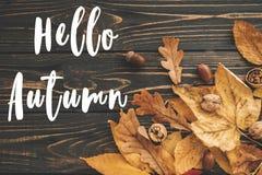Hello Autumn Text. Hello Fall sign on bright colorful autumn lea Stock Photos