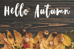 Hello Autumn Text. Hello Fall sign on bright colorful autumn lea Royalty Free Stock Image