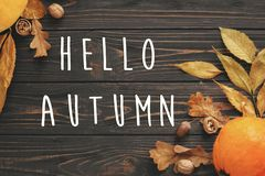 Hello Autumn Text. Hello Fall sign on Pumpkin, autumn vegetables Royalty Free Stock Photography