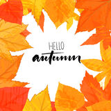 Hello autumn text. Vector brush calligraphy at hand drawn golden leaves frame. Royalty Free Stock Photography
