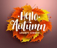 Hello autumn vector background design with autumn typography. And maple leaves in textured background for fall season greetings design. Vector illustration Stock Image