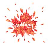 Hello Autumn Watercolor Floral Design with Maple Leaf. Seasonal Fall Banner, Poster, Print, Sale, Promo Template. Autumn. Abstract Background. Vector royalty free illustration