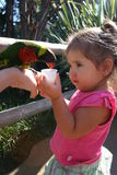 Hello Birdie. Toddler feeding a bird royalty free stock photos