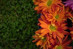 Hello blommar Royaltyfria Bilder