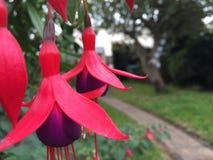Hello blommor Arkivfoto