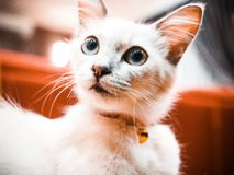 Hello cutie cat royalty free stock photos