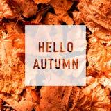 Hello-de herfst, begroetende tekst op kleurrijk vector illustratie