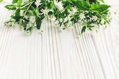 Hello-de lentebeeld mooie kleine witte bloemen met groen Royalty-vrije Stock Foto's