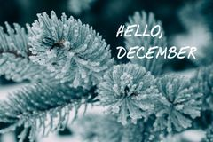 Free Hello December Text On Snow-covered Branches Of Blue Spruce. Winter Forest Covered With Snow And Ice At Day. Snowy Fir Trees, Icy Stock Image - 164889671
