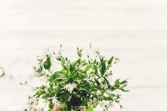 Hello fjädrar bild ny vit liten blommabouque för gräsplaner och Royaltyfria Foton