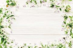 Hello fjädrar framlänges lekmanna- nya tusenskönalilablommor och gröna örter Royaltyfri Foto